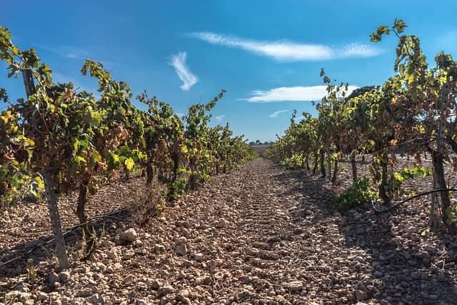 vine 1745180 640-lafea-vinos