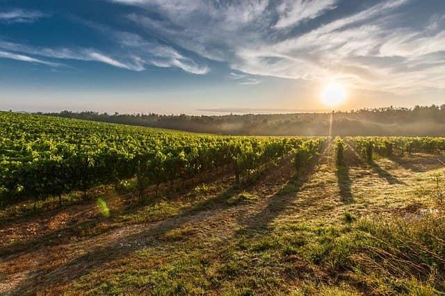 vineyard 428041 640-lafea-vinos